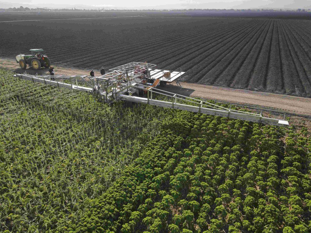 T-Belt Kale Harvester